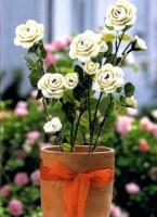 Розы 163671--52016775-h200-ua59d8