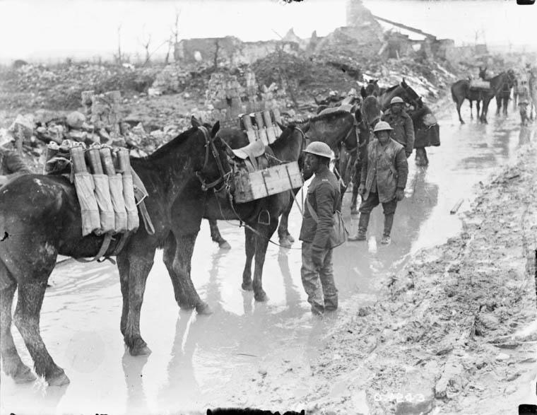 Le tétanos... et la première guerre mondiale A001229