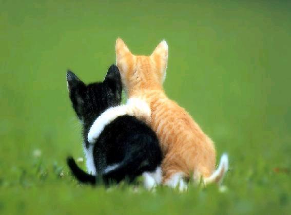 (صور قطط اتحداكم ماتعجبكم) Ed3hpcvv