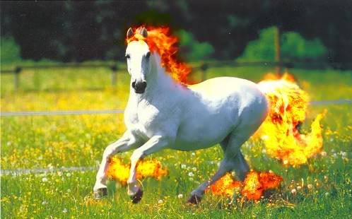 If Pokémon had good graphics. Rapidash-real-pokemon