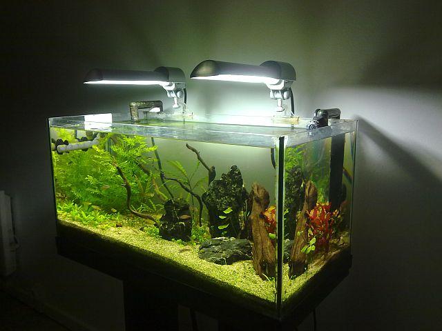 aquarium 60l nano Sulawesi (Thierry) Ens1