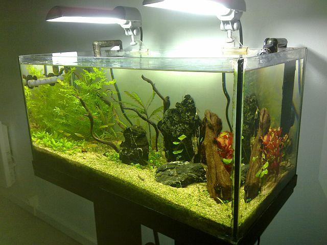 aquarium 60l nano Sulawesi (Thierry) Ens2