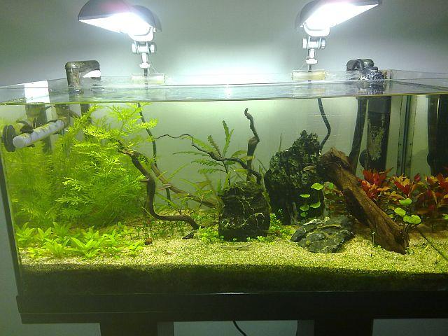 aquarium 60l nano Sulawesi (Thierry) Ens3