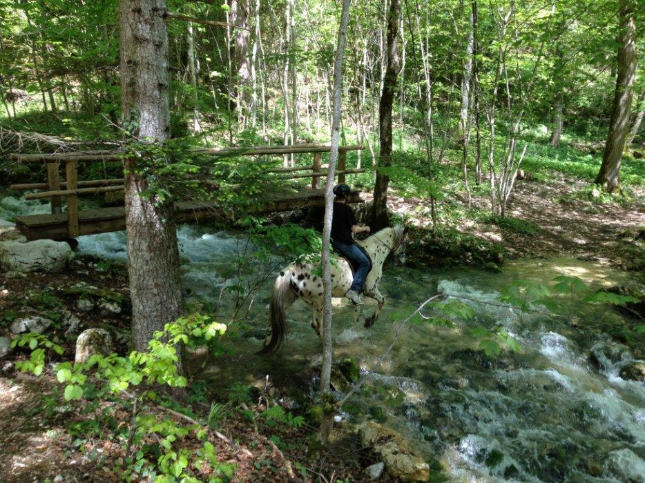 CONCOURS PHOTOS : Chevaux et nature.... 3087910207_2_3_dC7OjBit