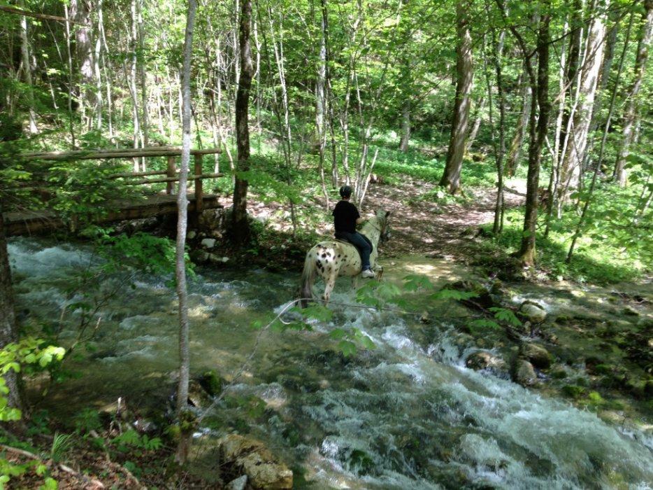 CONCOURS PHOTOS : Chevaux et nature.... 3087911223_2_3_Dja2AFST