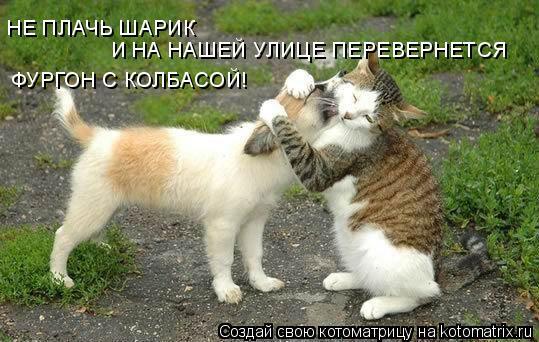 Друзья все понимают - Страница 3 Kotomatrix_18