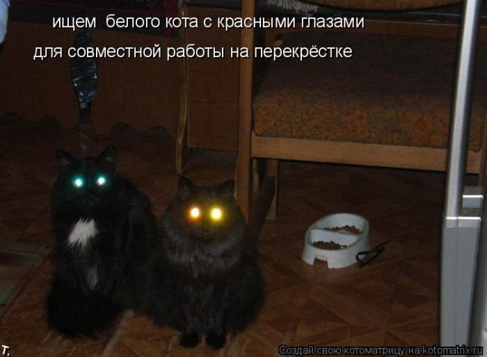 Котоматриця!)))) Kotomatrix_48