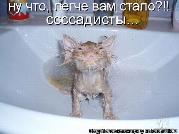 Котоматриця!)))) Kotomatrix_01