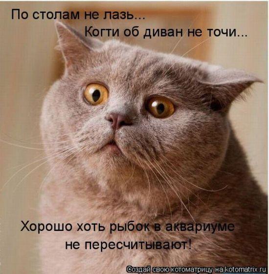 Котоматрица Kotomatrix_32