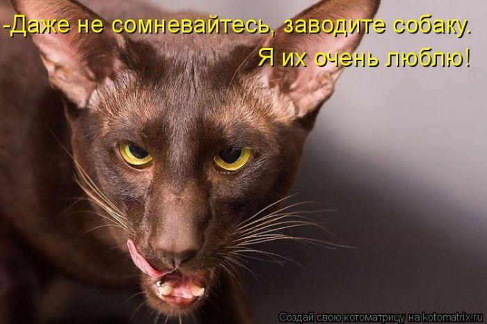 Котоматриця!)))) Kotomatrix_38