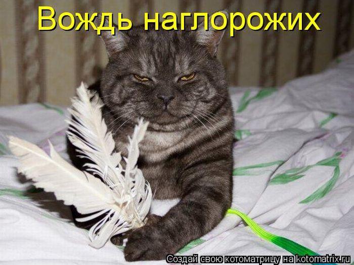 давайте посмеемся - Страница 39 Kotomatrix_05