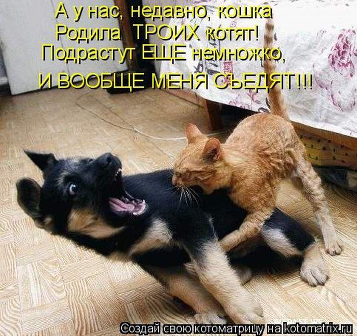 давайте посмеемся - Страница 39 Kotomatrix_19