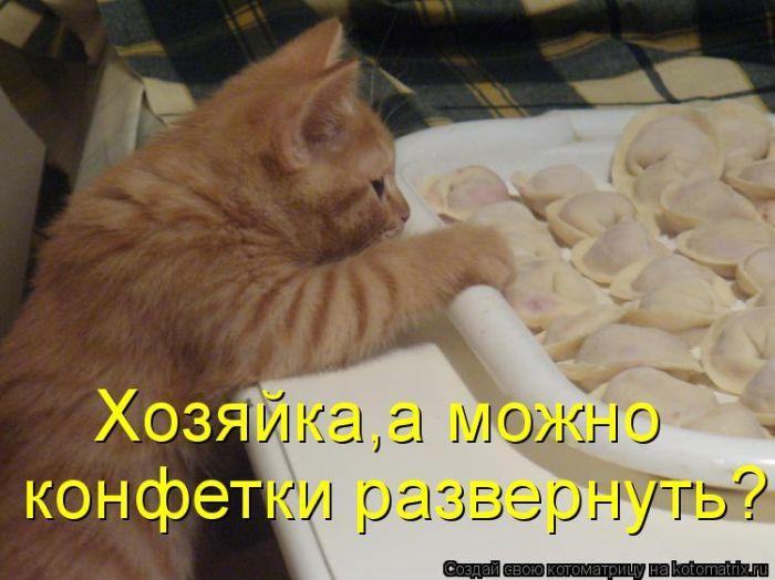 давайте посмеемся - Страница 39 Kotomatrix_23