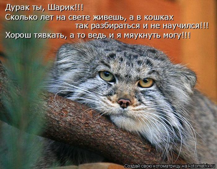 давайте посмеемся - Страница 39 Kotomatrix_24