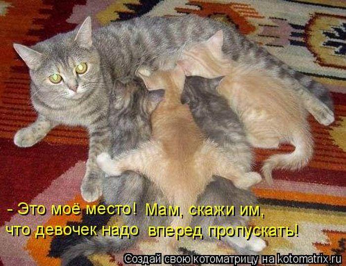 Кошечки..Кошарики)) Kotomatrix_33
