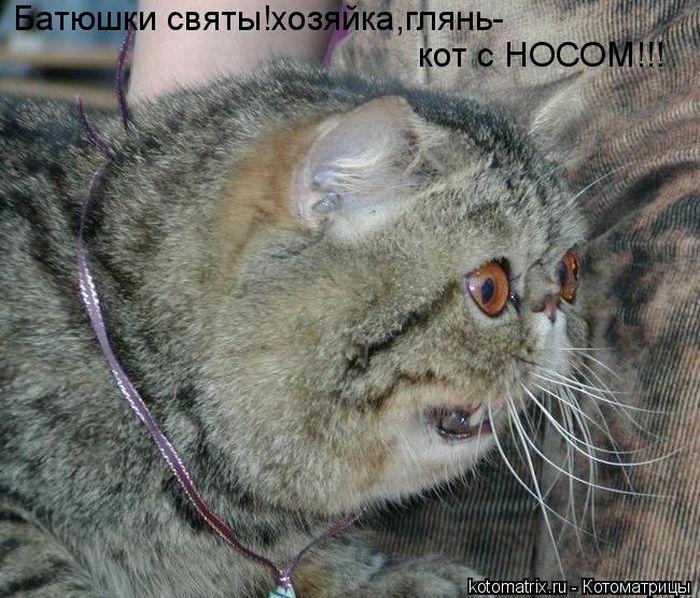 Котоматриця!)))) Kotomatrix_37
