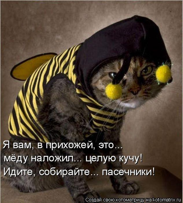 Котоматриця!)))) Kotomatrix_41