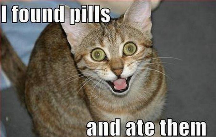 panda contraception thread Found-pills-ate-pills-hahaha