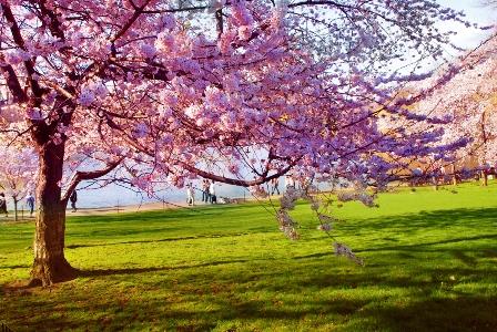 Magija različitih godišnjih doba Spring2