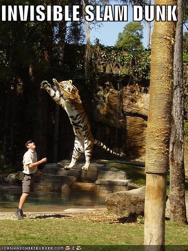 Tiger Woods Funny-pictures-tiger-invisible-slamdunk1
