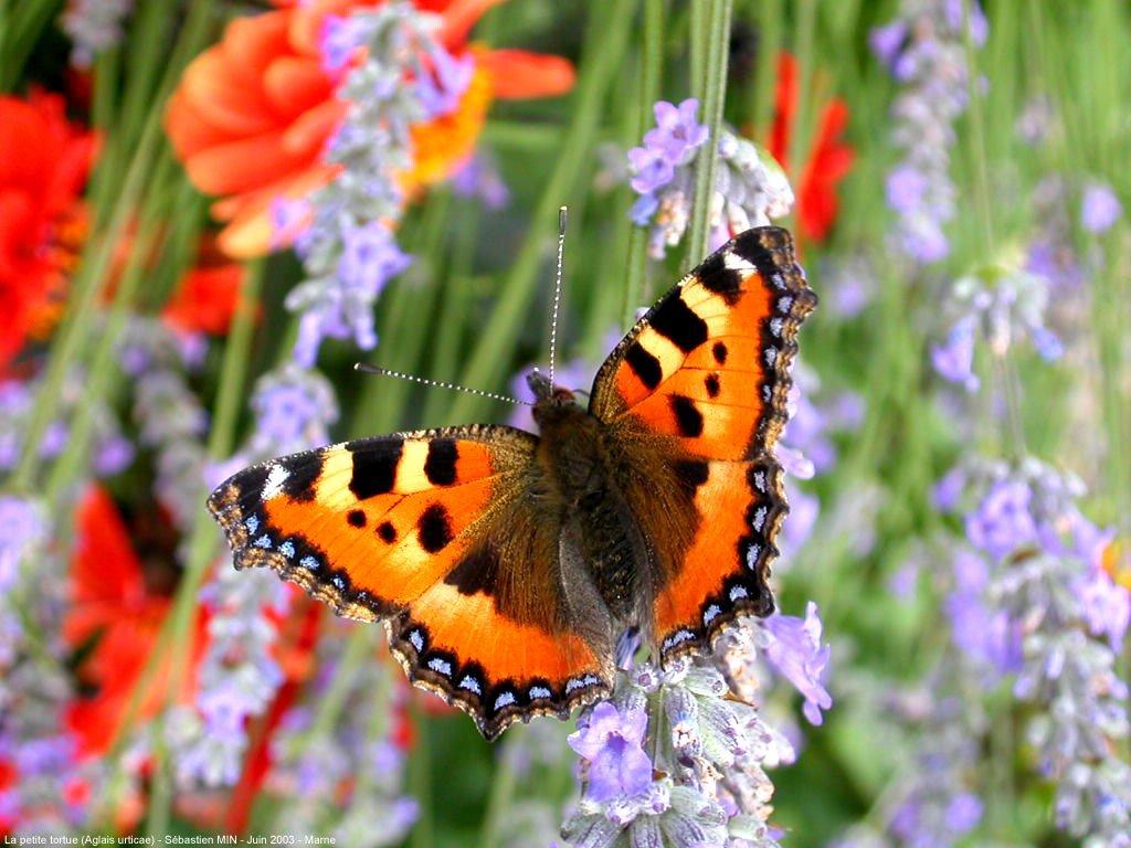 Orange Day - Page 4 Papillon_003
