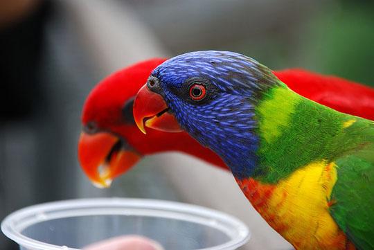طيور جميلة بالوان ملونه 101