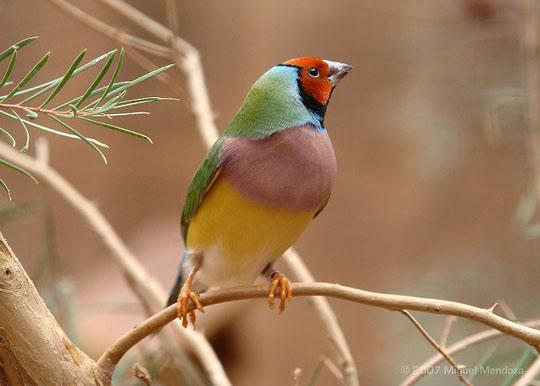 طيور جميلة بالوان ملونه 131