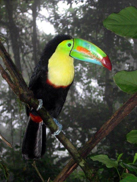 طيور جميلة بالوان ملونه 141