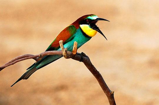 طيور جميلة بالوان ملونه 161