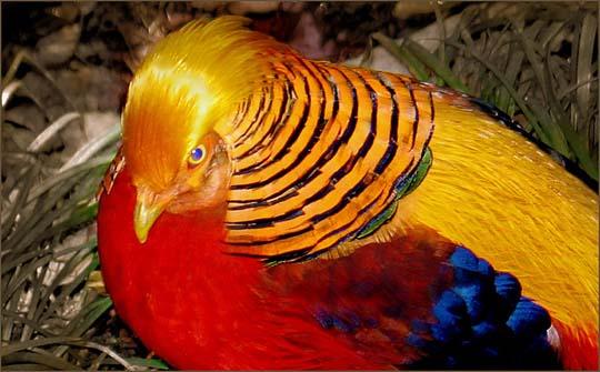طيور جميلة بالوان ملونه 171