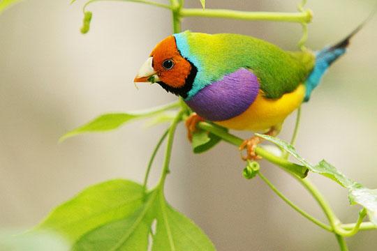 طيور جميلة بالوان ملونه 181