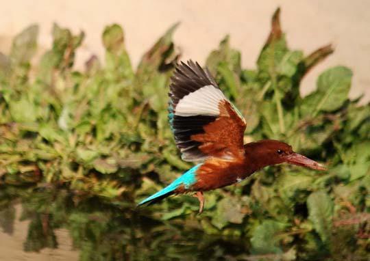 طيور جميلة بالوان ملونه 191