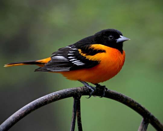 طيور جميلة بالوان ملونه 201