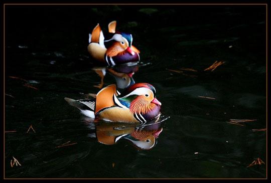 طيور جميلة بالوان ملونه 21