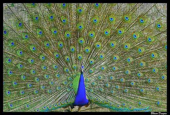 طيور جميلة بالوان ملونه 211