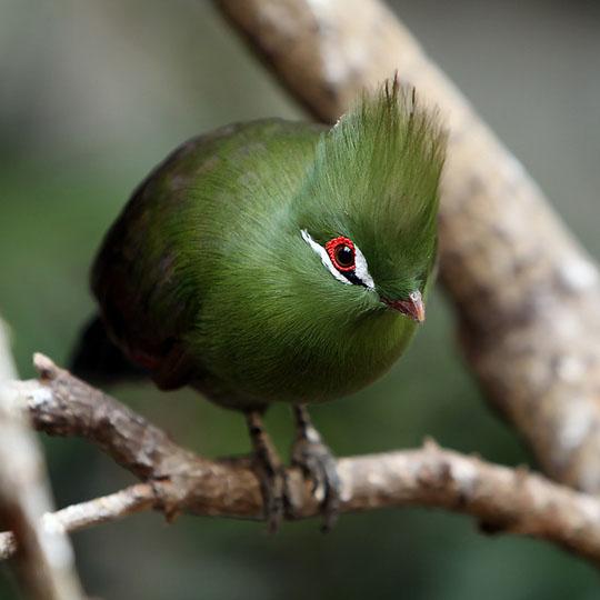 طيور جميلة بالوان ملونه 23
