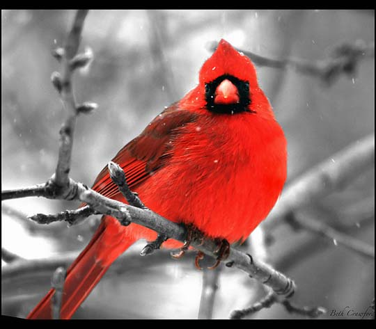 طيور جميلة بالوان ملونه 24