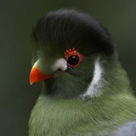 طيور جميلة بالوان ملونه 27