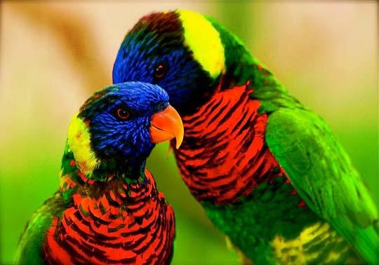 طيور جميلة بالوان ملونه 29