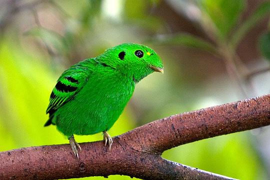 طيور جميلة بالوان ملونه 30