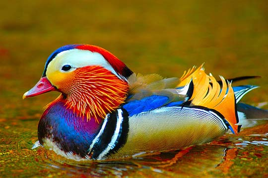 طيور جميلة بالوان ملونه 311