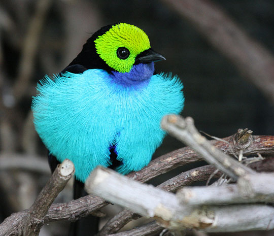 طيور جميلة بالوان ملونه 33