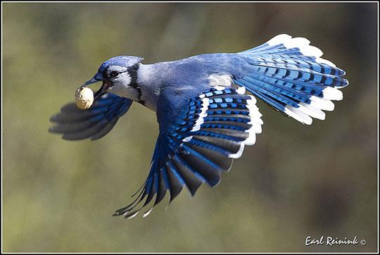 طيور جميلة بالوان ملونه 36