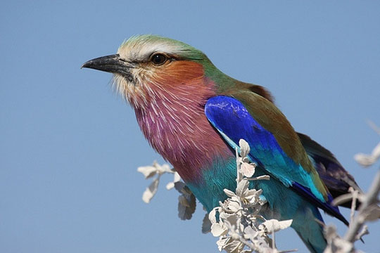 طيور جميلة بالوان ملونه 41