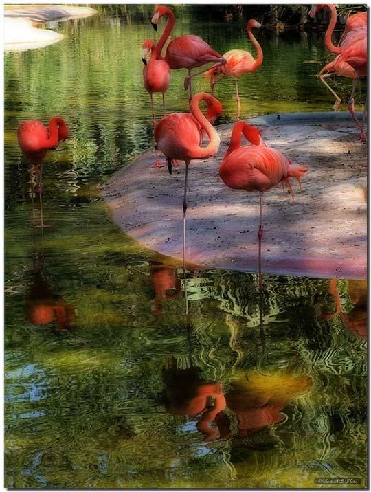 طيور جميلة بالوان ملونه 61
