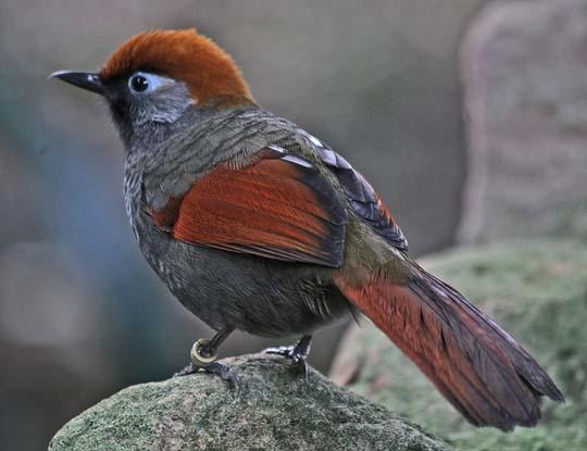 طيور جميلة بالوان ملونه 71