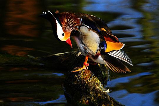 طيور جميلة بالوان ملونه 81