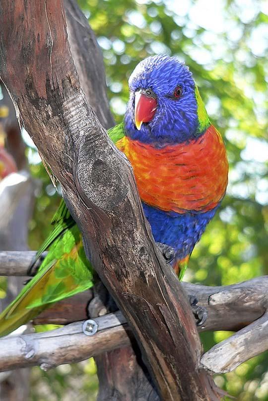 طيور جميلة بالوان ملونه 91