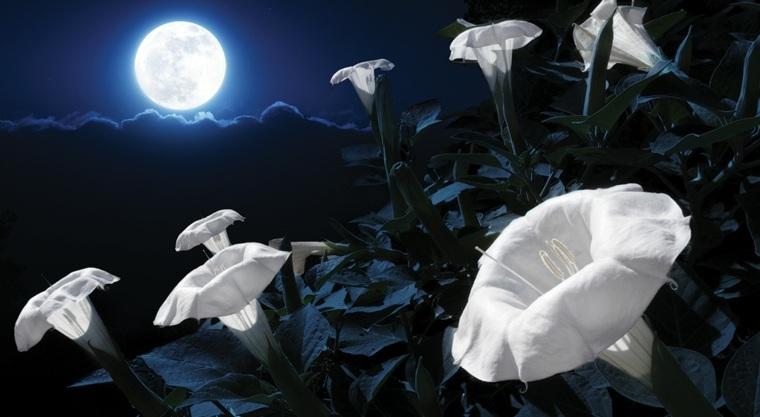 Jeudi 30 juin Calendrier-lunaire-jardin