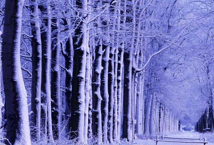 А за окном зима... 1106